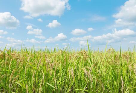各地政策频出,生物质发电引重视
