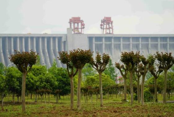 三峡集团长江特有珍稀植物保护品种突破1000种